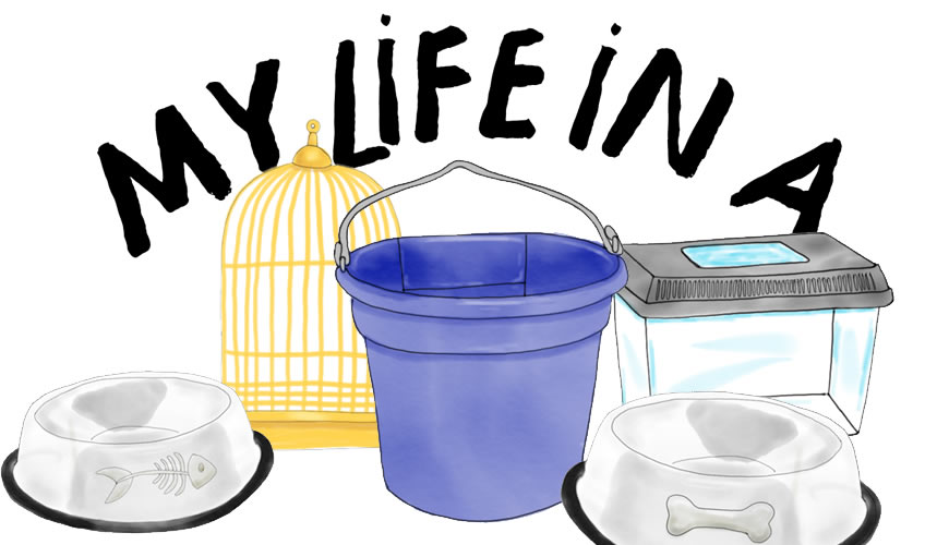 feed-bucket